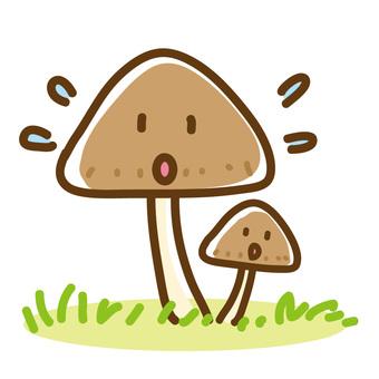 조급 버섯의 친자