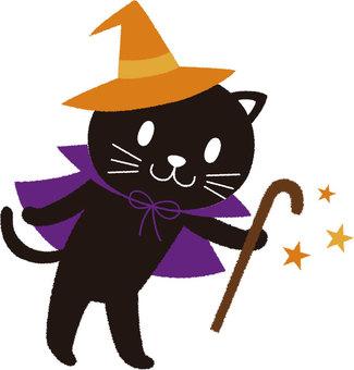 Witch black cat