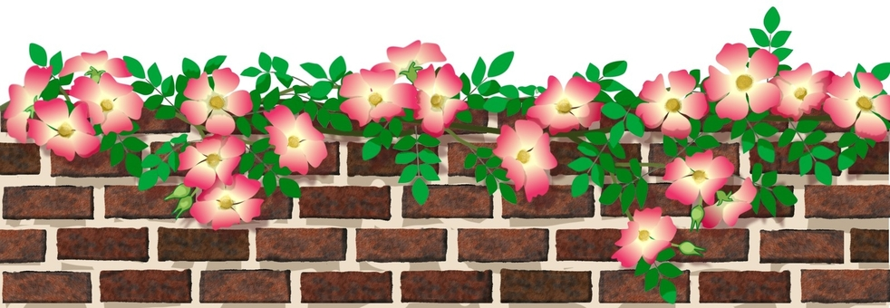 Brick fence and roses