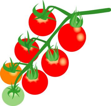 물들기 시작한 방울 토마토
