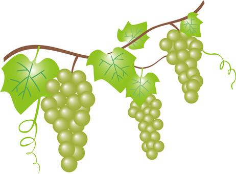 Grape (green)