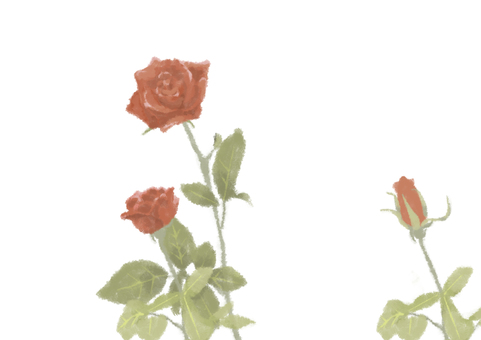 Roses with brush painting (white background)