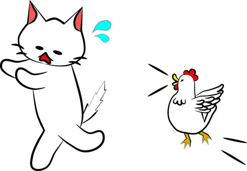 Chicken chases cat