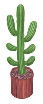 Houseplant 5