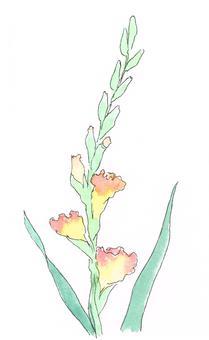 Gladiolus watercolor