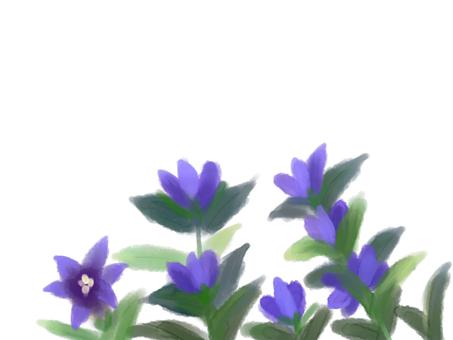 龍柳(龍膽)2