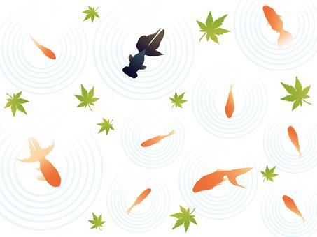 Goldfish illustration 03