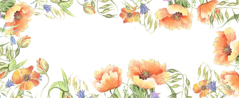 Bright poppy frame, flower frame