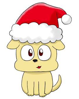 Wanko wearing Santa's hat