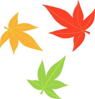 Momiji leaves