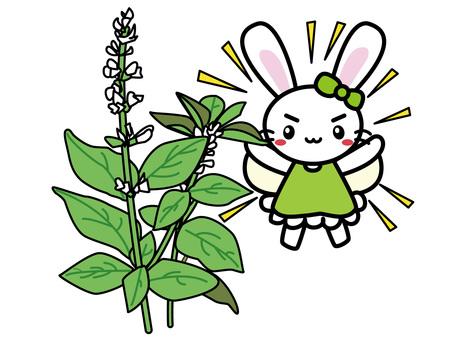 Aroma Usako (basil)