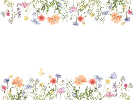 Flower frame flower frame 224 - Wild flower flower frame