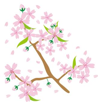 h28 Sakura material 26