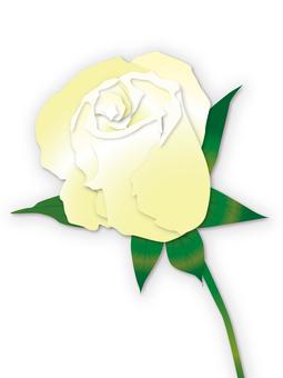 White Roses Bud