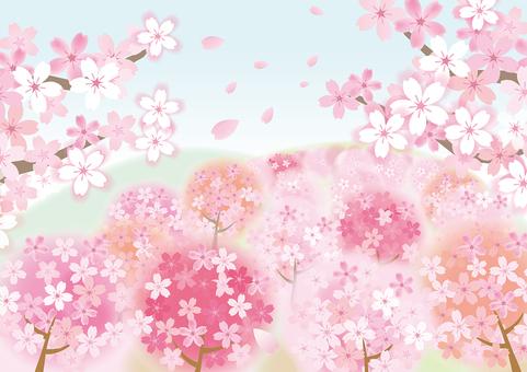 Spring landscape Sakura 3