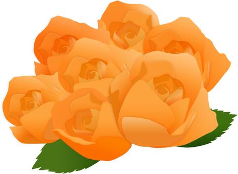 Barabooke Orange