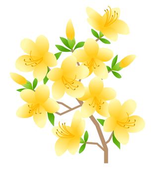 Azalea (yellow)