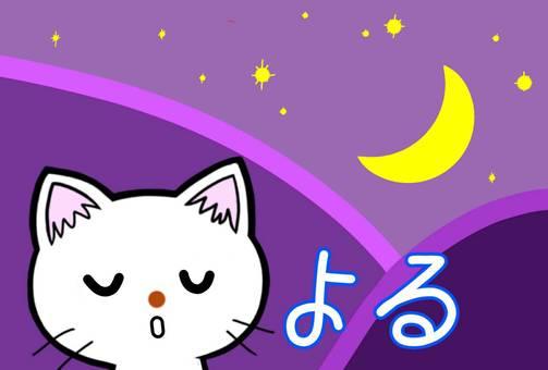 Moon night cat