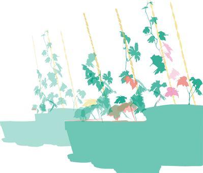 Veranda cultivation