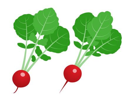 Radish (20th radish)