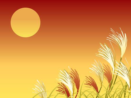 Susuki and the evening sun