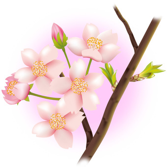 Cherry branch 01