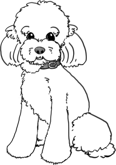 Toy poodle (coloring)
