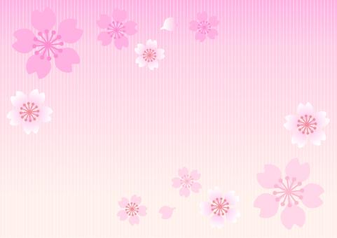 Spring cherry background