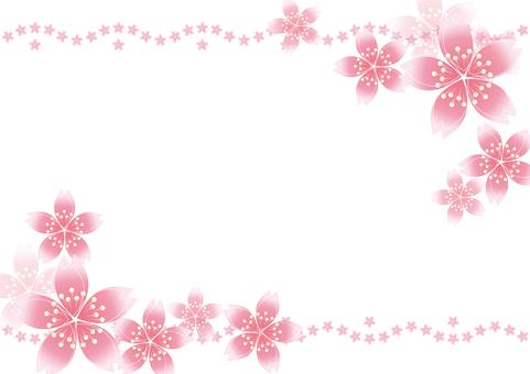Sakura cherry line 19