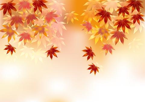 Autumn leaves 320
