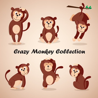 Monkey collection