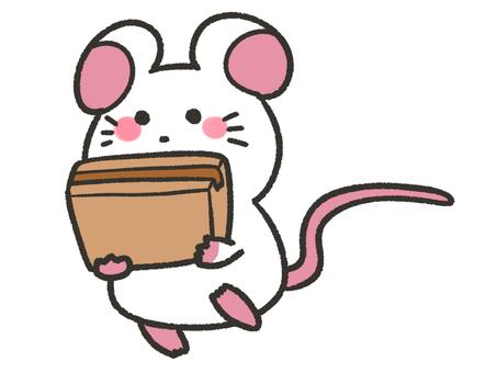 Cute rat carrying cardboard