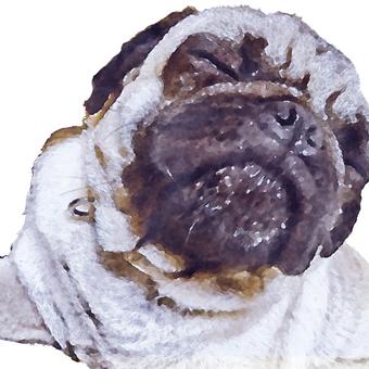 Pug - watercolor