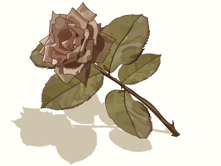 Pink Rose Sepia