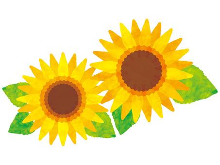 花ひまわり水彩夏8月7月向日葵ヒマワリ絵