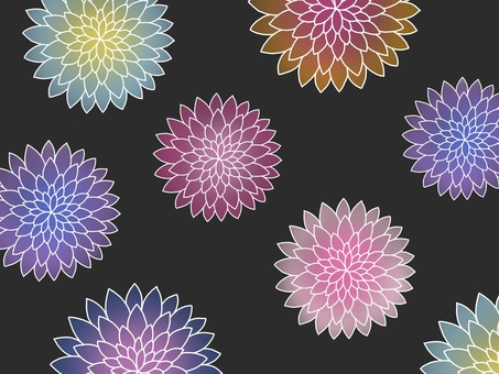 【Background Material】 Chrysanthemum