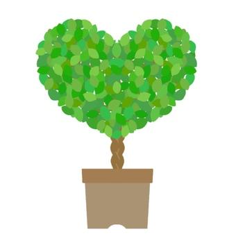 Heart shaped foliage plant