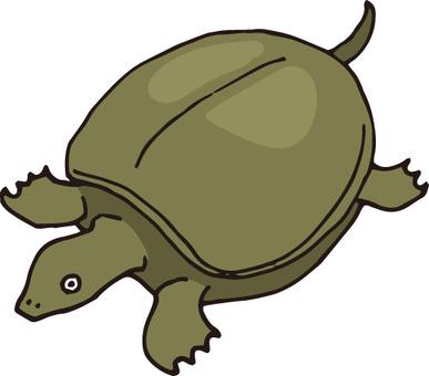 Turtle (turtle)