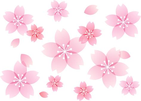 200201.Sakura 10