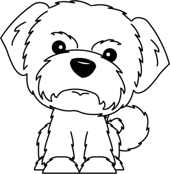 Dog (Maltese)
