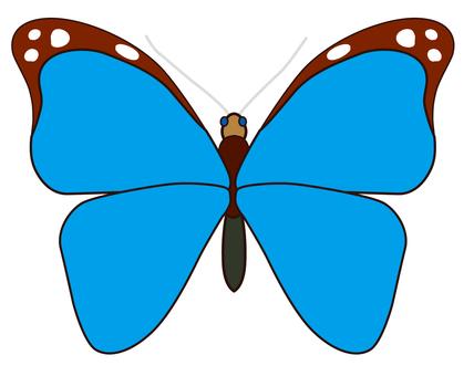 나비 02