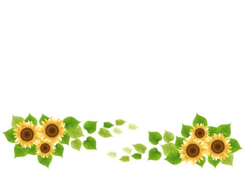 Sunflower 47