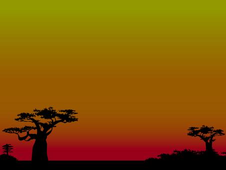 Baobab sinking in the cut dusks