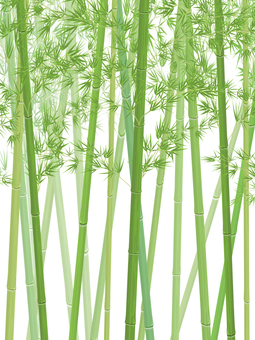 Bamboo grove_vertical_no background