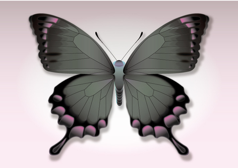 Swimsuit for tattoo black swallowtail butterfly