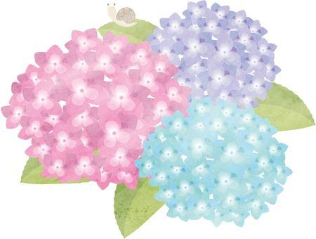 Hydrangea watercolor style