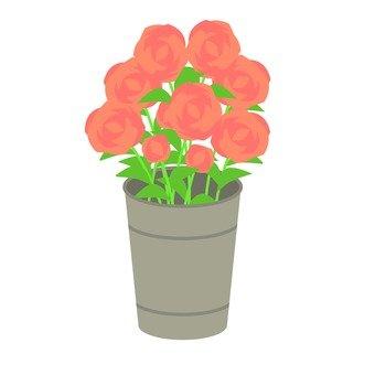 Rose, red