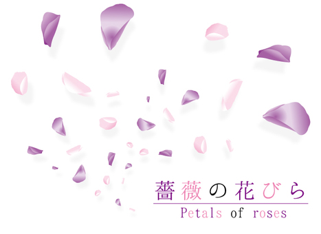 장미 꽃잎 춤 5