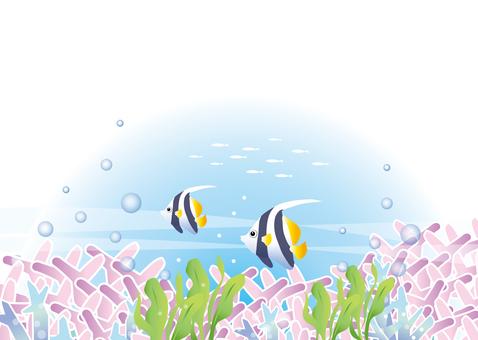 Sea where tropical fish swim