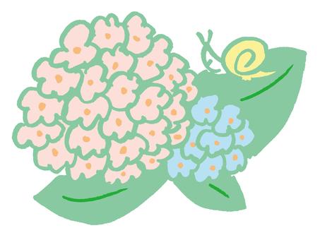 Hydrangea (color)